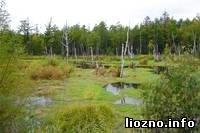 На Лиозненщине будут строить… болота