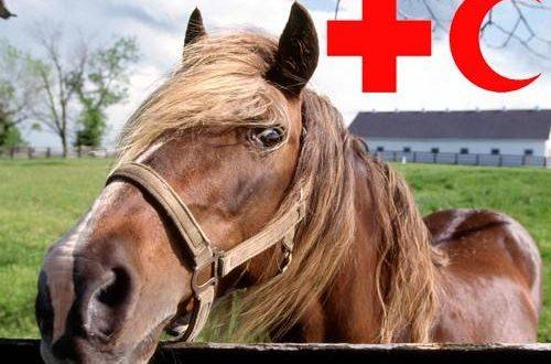 """Деревне Выходцы поможет """"Швейцарская"""" лошадь Зорька"""
