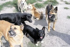 Собак отстреливали прямо на глазах у прохожих