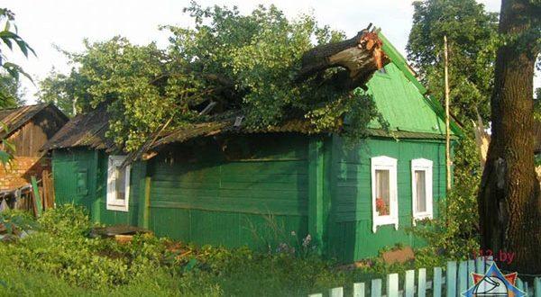 Дерево упало на крышу дома в Лиозно