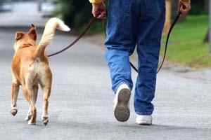 Пять запретов для владельцев кошек и собак