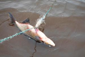 В Лиозненском районе задержали браконьера