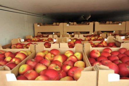 Санкционные фрукты и овощи из Беларуси