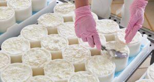 Производство сыра «Камамбер» освоено в Лиозно