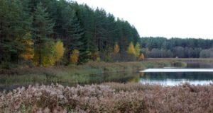 Республиканская акция «Чистый лес» в Лиозно