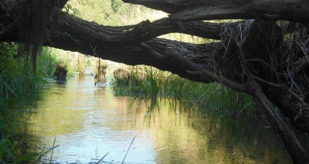 Сплав по реке Черница