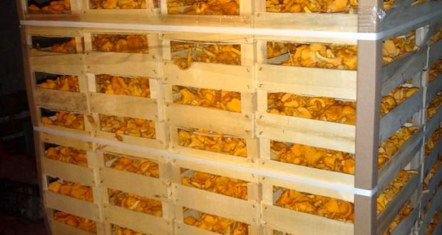 В Лиозно задержали более 400 килограммов лисичек