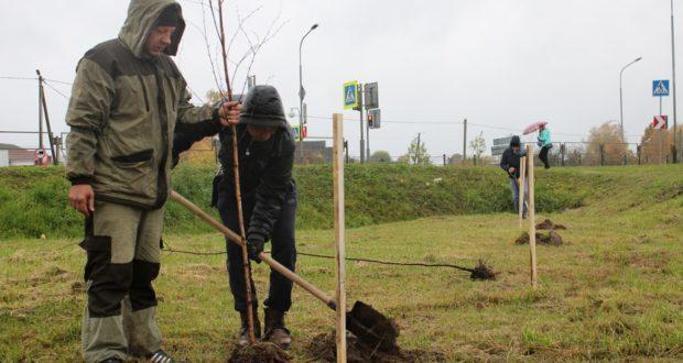 В каждый четверг проводят мероприятия по благоустройству территорий Лиозно