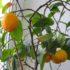 «Солнышки» на окне в Лиозно