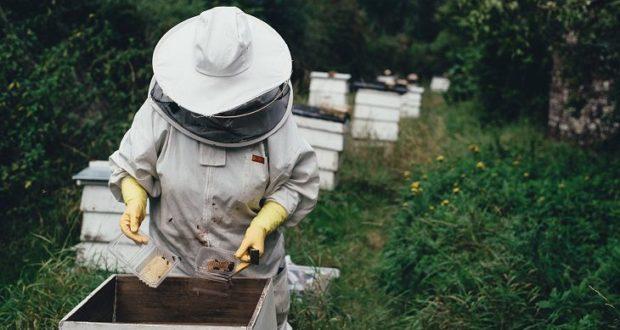 Медку захотелось. Житель Лиозно украл 16 пчелиных ульев