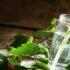 И родина щедро поила меня березовым соком - Лиозно