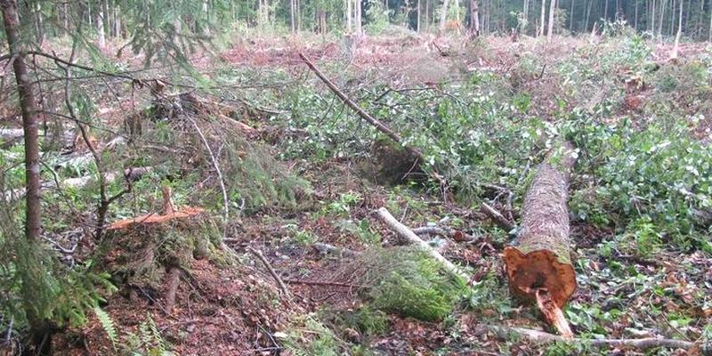 В Лиозненском районе погиб лесоруб