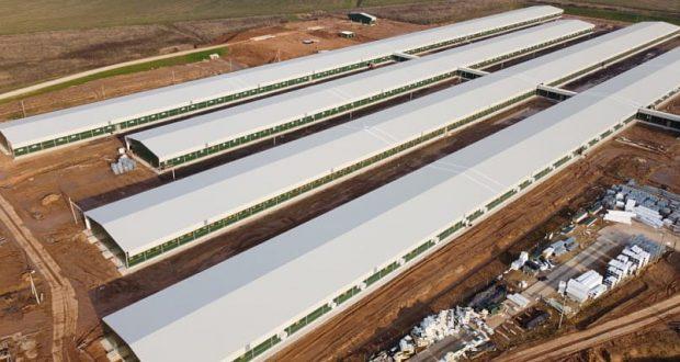 Строительство свинокомплекса вблизи агрогородка Пушки Лиозненского района