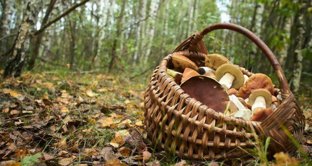 Опять потерялись грибники в Лиозненском районе